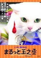 猫侍 まるっと玉之丞の評価・レビュー(感想)・ネタバレ