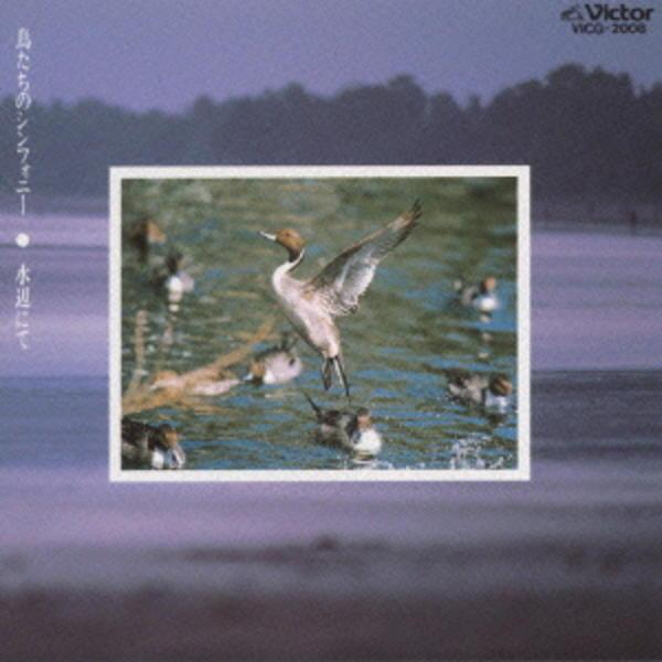 鳥たちのシンフォニー/水辺にて